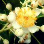 suragi flower1